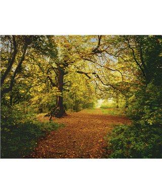 FOTOTAPETE AUTUMN FOREST