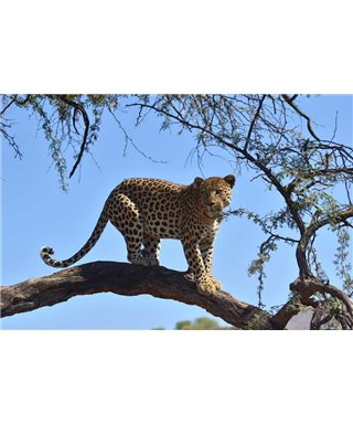 WorldTrip Leopard