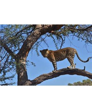 WorldTrip Leopard On The Three