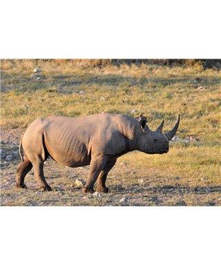 WorldTrip Rhino
