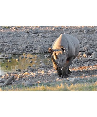 WorldTrip Walking Rhino
