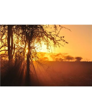 WorldTrip Sunset Tanzania