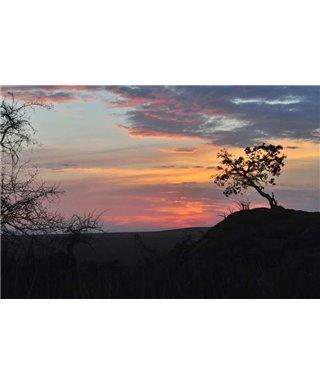 WorldTrip Sunset In The Bush