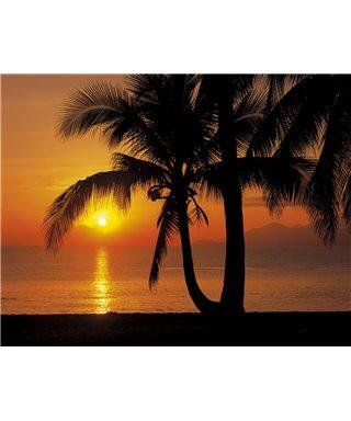 POSTER FOTOMURALE PALMY BEACH SUNRISE
