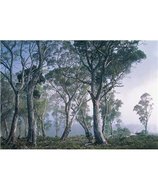 POSTER FOTOMURALE FANTASY FOREST