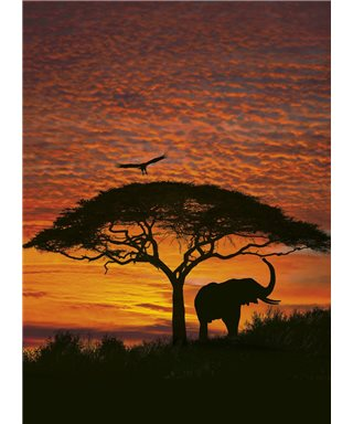 POSTER FOTOMURALE TRAMONTO IN AFRICA